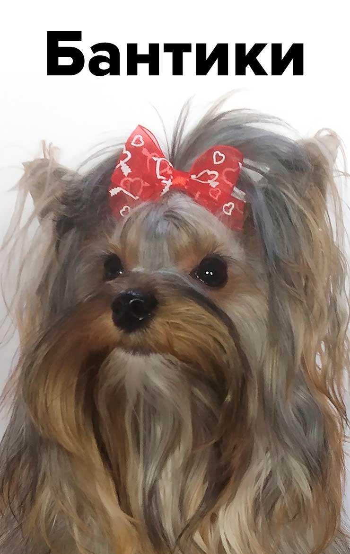 Бантики для собак
