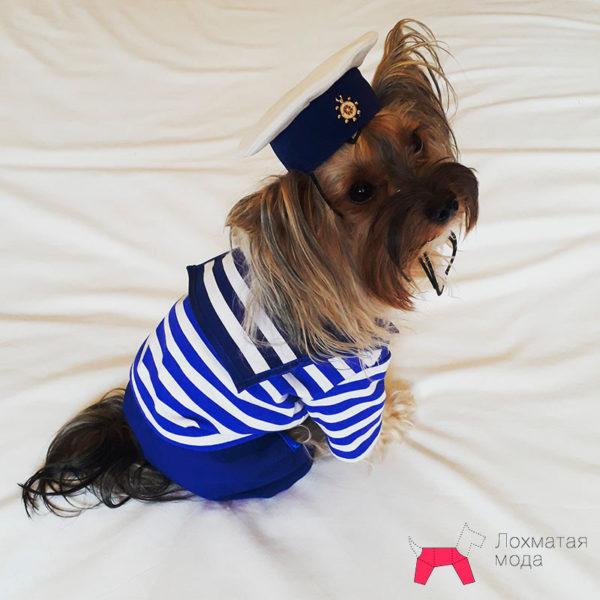 костюм для маленькой собачки - морячок