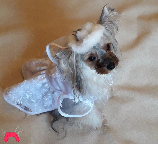 свадебное платье для собак маленьких пород