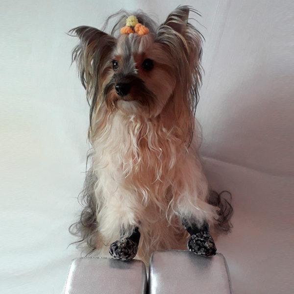 сапожки пятнистые, обувь для собак