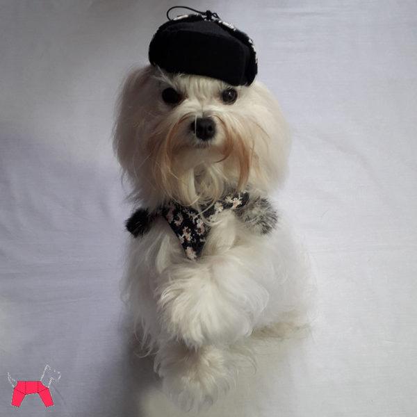 Праздничный костюм для собаки «Сибирячок»